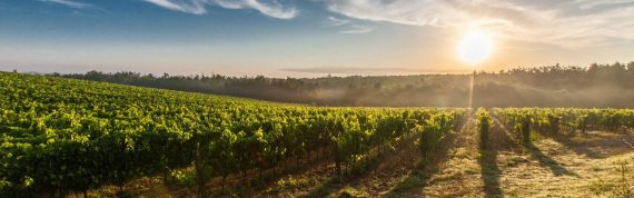 vineyard-program