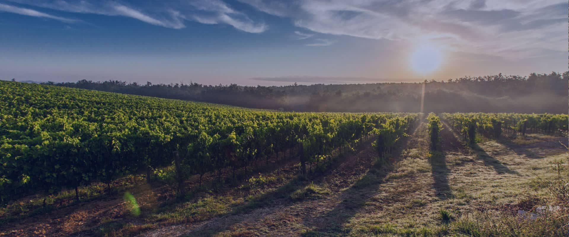 vineyard-min
