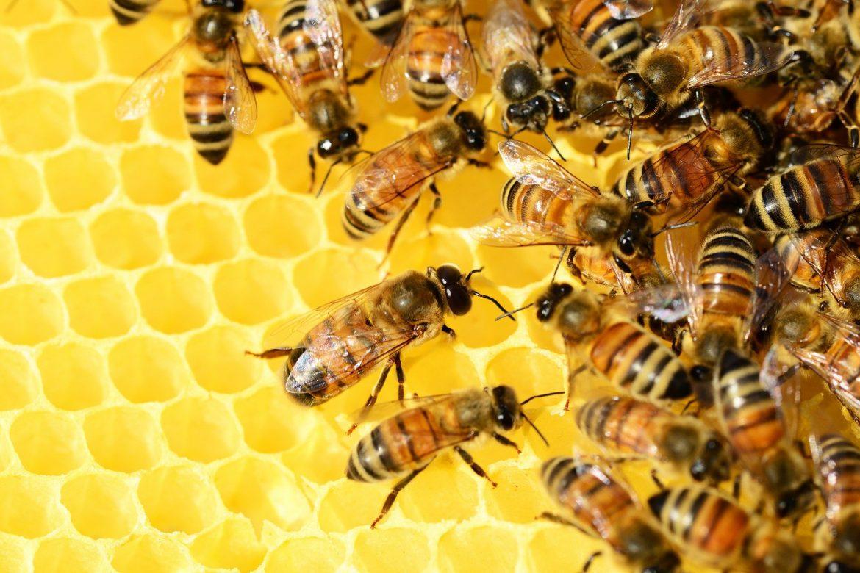 пчеларство